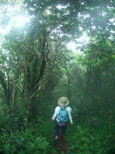 森に包まれる時間