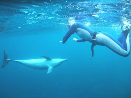イルカと見つめ合う