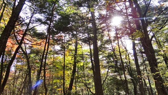 1200年の森
