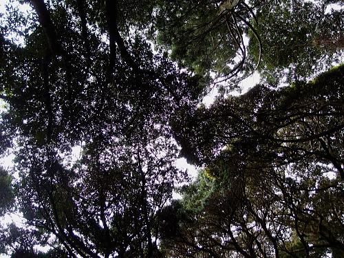 森につつまれる