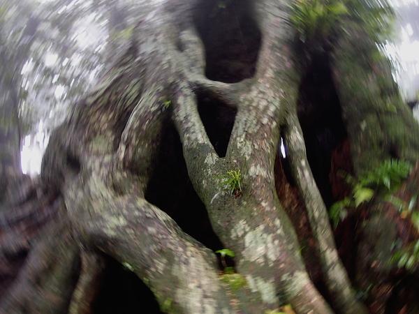 魂の宿る樹