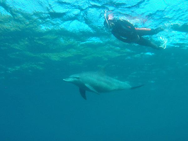 イルカと人