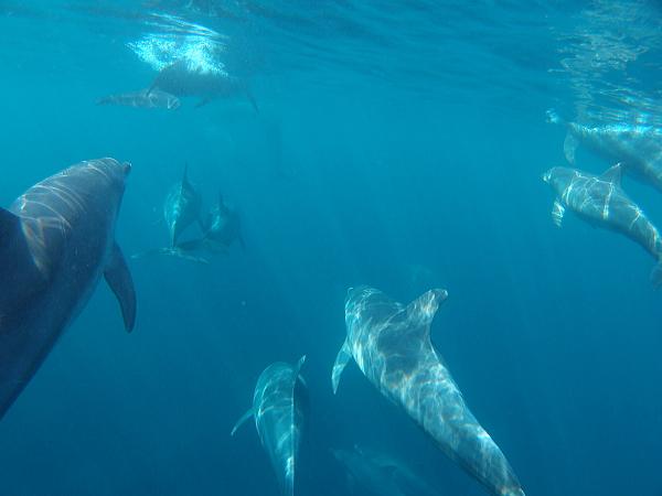 イルカたち