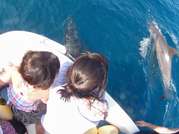 イルカと子供