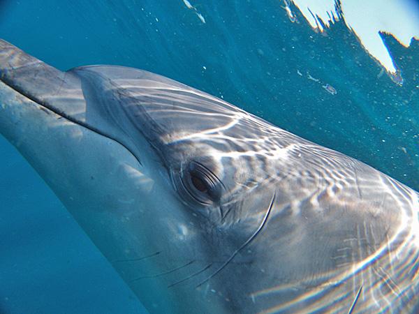 イルカの横顔