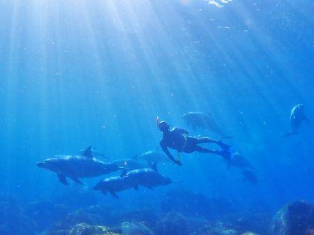 イルカと潜る