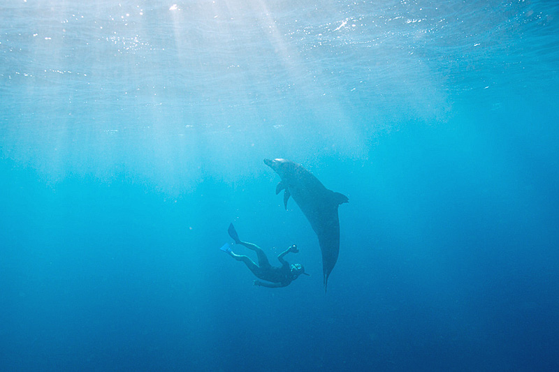 イルカと泳ぐ