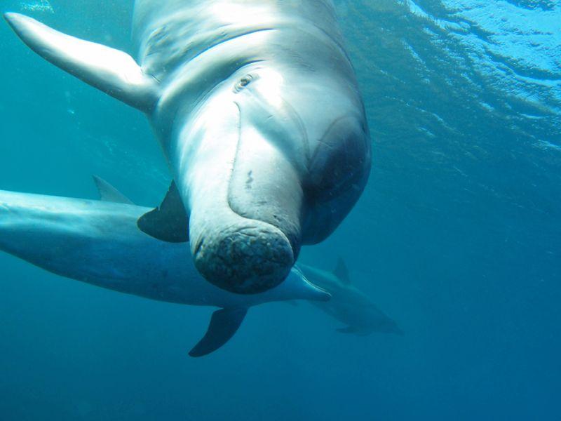 イルカと眼が合う